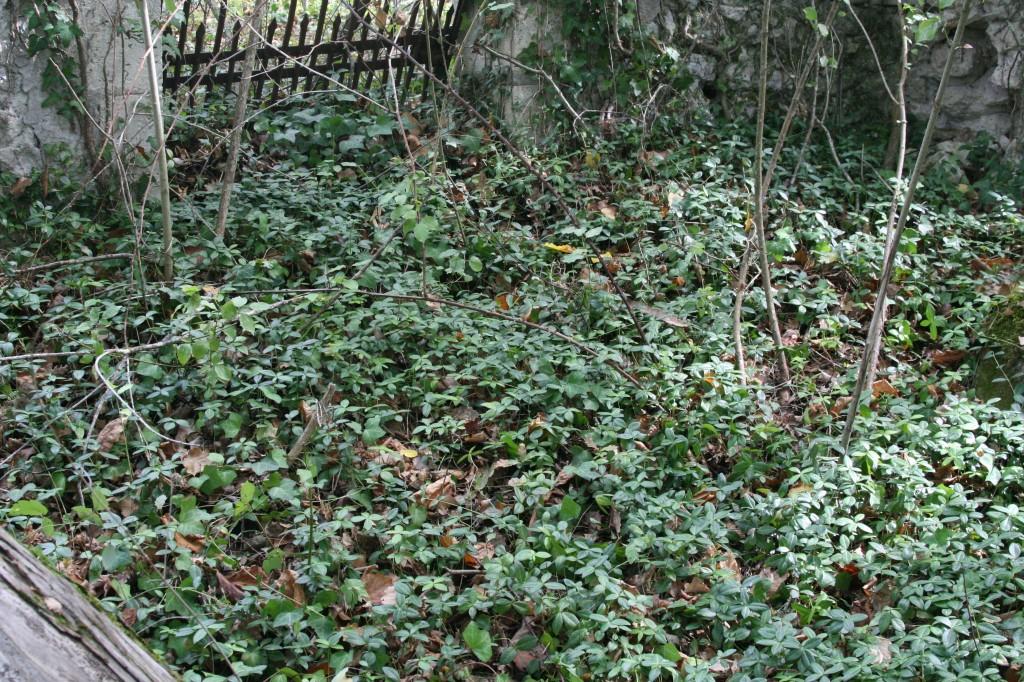 Emplacement de la tombe de Blanche dans le cimetière privé, en forêt, situé à Larchère, en Dordogne.