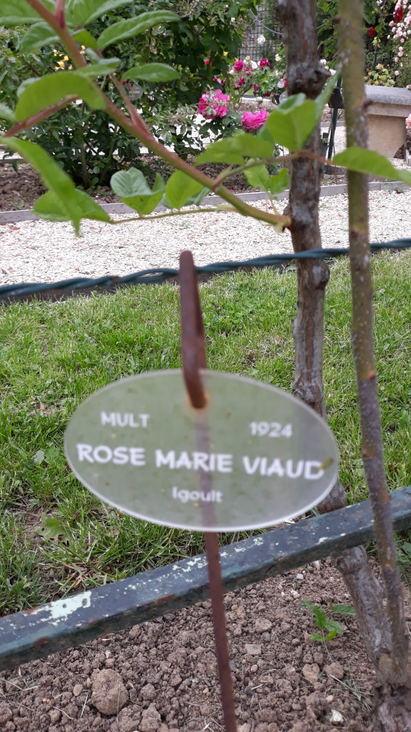 Rose M Viaud-1924_2