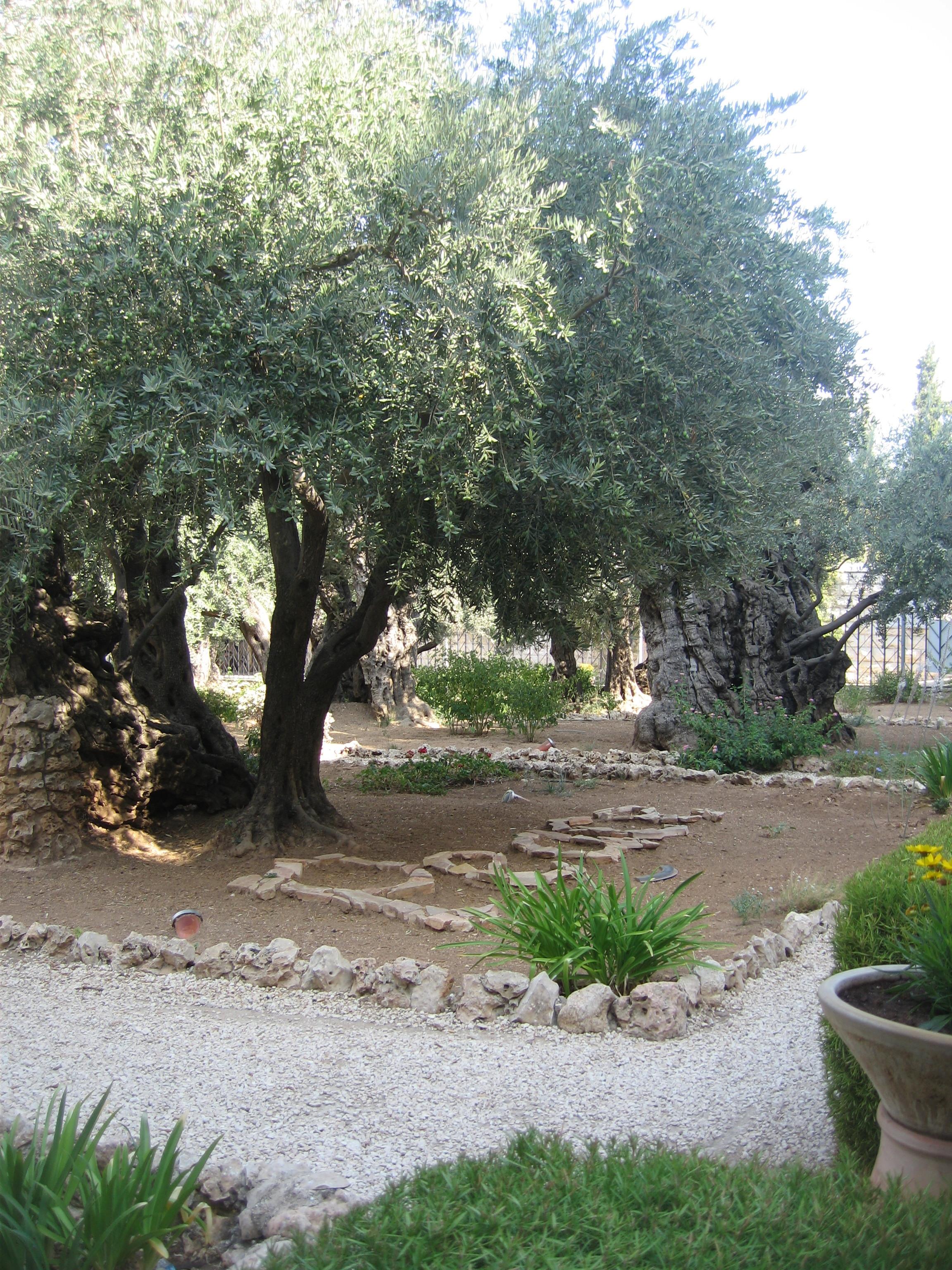 11-Le Jardin du Gethsémani